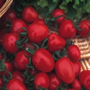 Tomato Red Alert - 40 seeds